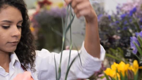 Portrait of Serious Florist Selecting Flowers