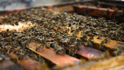 Bees At The Beehive
