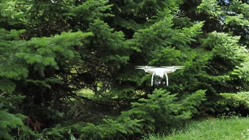 Flying dron in the spruce forest.