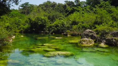 River in the Jungle