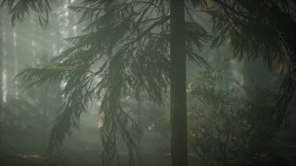 Thumbnail for Morning with Fog in Sequoia National Park