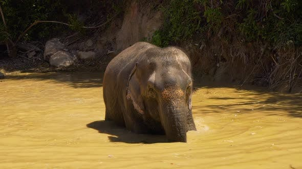 Thumbnail for Elephant Cooling Off In A Lake