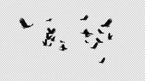 22 schwarze Vögel - Fliegende Transition IV