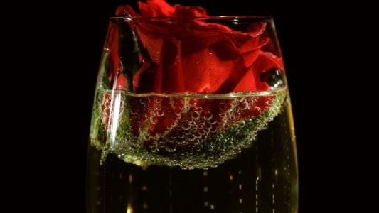 Thumbnail for Red Rose in Champagne Glass