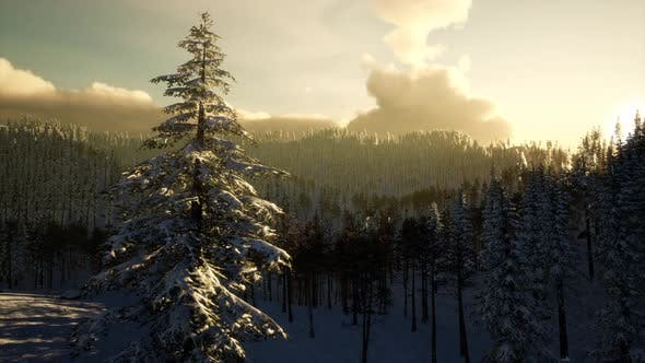 Thumbnail for Majestic Winter Landscape Glowing By Sunlight