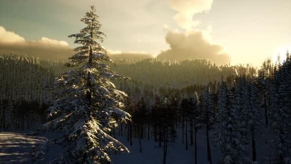 Majestic Winter Landscape Glowing By Sunlight