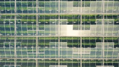 Greenhouses with Vegetables