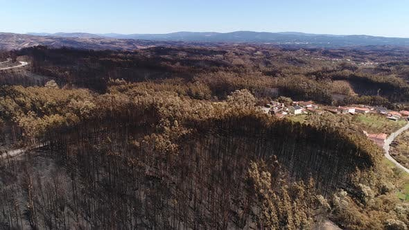 Thumbnail for Village Surrounded by Burned Forest