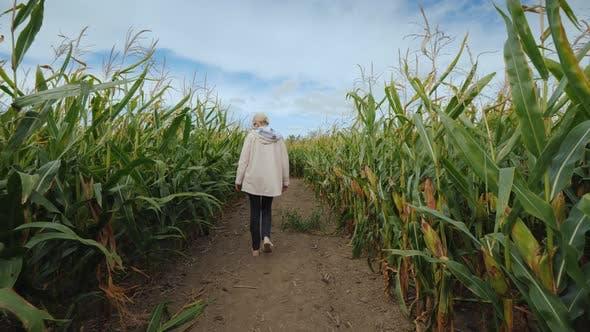 Thumbnail for A Young Woman Walks Through an Autumn Maze in an American Farm