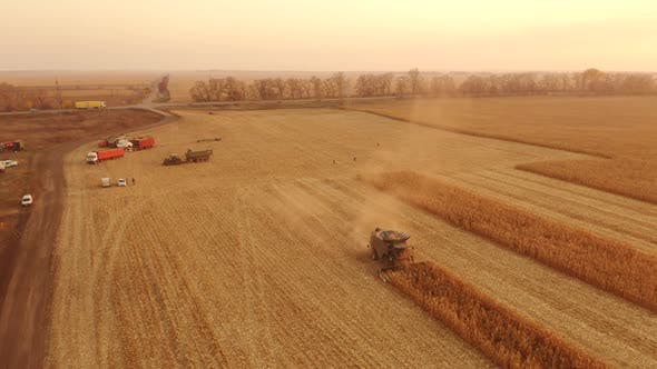 Agricultural Machinery Gathering Ripe Maize Crop