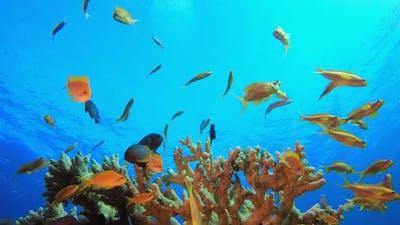 Blue Sea Tropical Fish