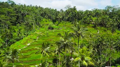 Tegalalang Rice Terrace in Ubud Bali Indonesia