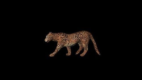 Cougar Walk
