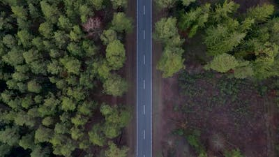 Aerial Autumn Road