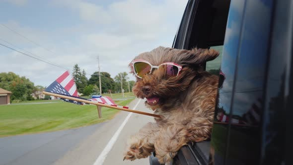 Thumbnail for Funny Dog with the American Flag Looks Out of the Window of the Car