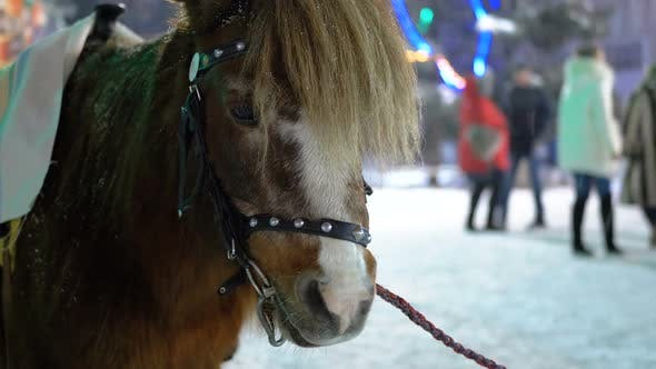 Thumbnail for Cute Pony in the Evening on the Street Stands Under Falling Snow on the Christmas Market in Winter