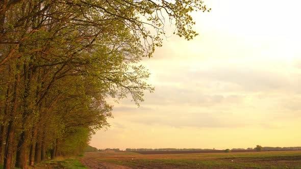Cover Image for die bäume des feldes