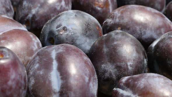 Thumbnail for Slow tilt on organic plum fruit from genus Prunus  4K video