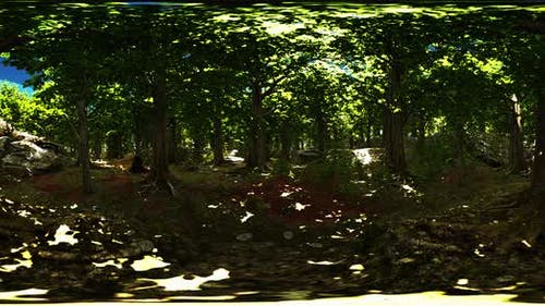 VR360 View of Morning Green Forest