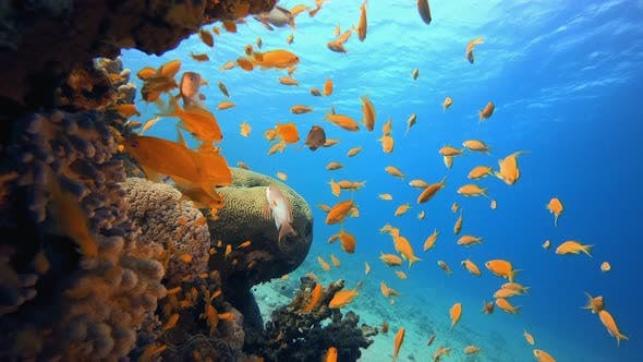 Cover Image for Underwater Fish Reef Marine