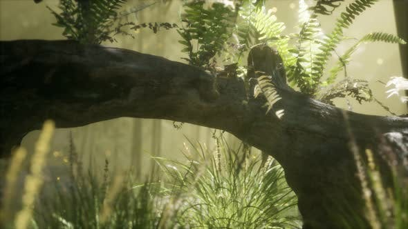Horizontally Bending Tree Trunk with Ferns Growing and Sunlight Shining