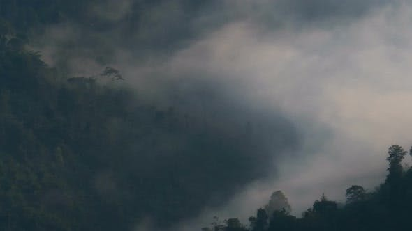 Thumbnail for Mystic Fog Moving Over Forest