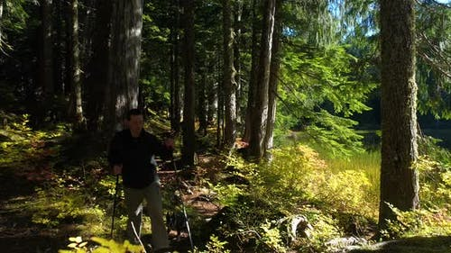 Dog Following Male Caucasian Man With Hiking Poles On Sunny Green Forest Trail