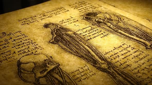 Thumbnail for Anatomie Kunst Zeichnung