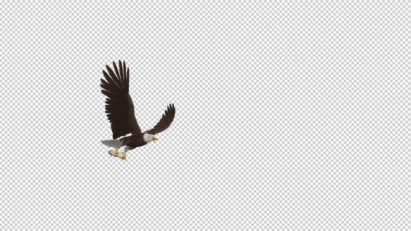 Cover Image for Bald Eagle with Salmon Fish - 4K Flying Transition I
