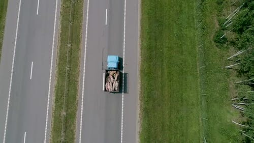 A Lorry Carrying Pigs Along the Road