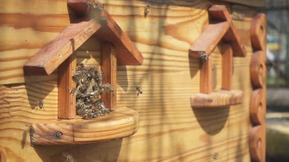 Bees Flying In And Out Beehive 30