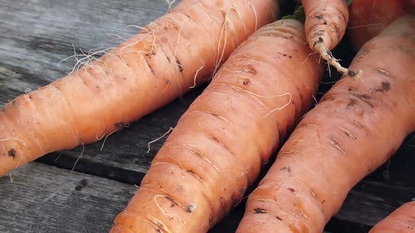 Thumbnail for Carrot Harvest Harvested on Rustic Wooden Background