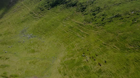 Thumbnail for Aerial Drone Wide View. Wild Horses on the Green Mountains In Background Rock and Blue Sky.