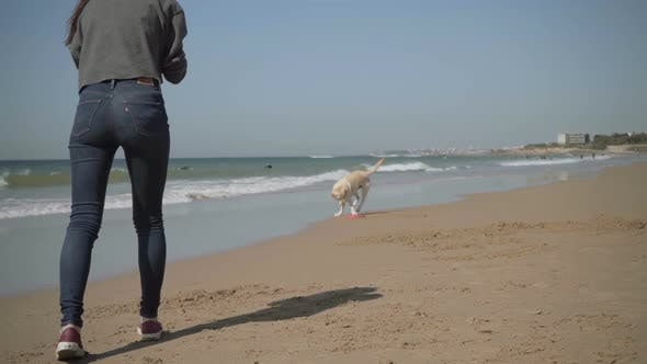 Slow Motion Shot of Dog Catching Flying Disk on Sandy Beach