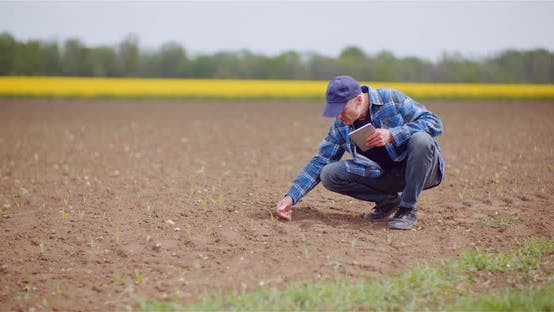 Farmer Examining Agricultural Field While Working on Digital Tablet Computer at Farm.