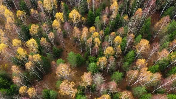 Autumn Forest with Colorful Foliage