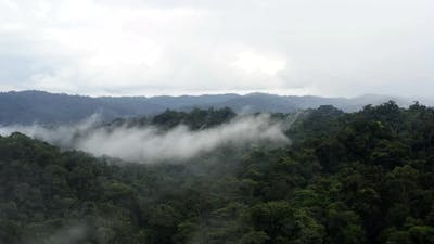 Aerial view of tropical forest canopy covered in mist, flying through the mist
