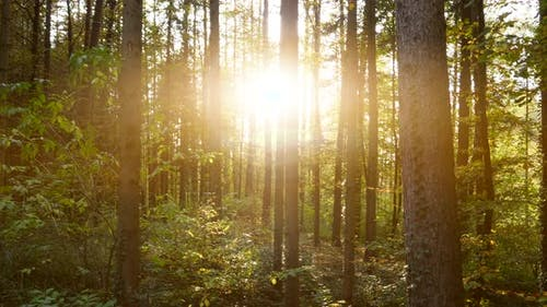 Nature Environment of Forest Trees Landscape