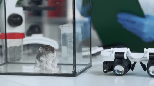 Close-up View of Hamster in Glass Container in Chemistry Lab