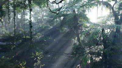 Misty Jungle Rainforest in Fog
