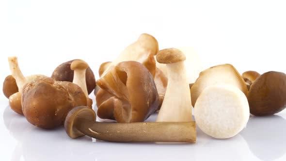 Thumbnail for Shooting of Several Big and Small Chinese Mushrooms