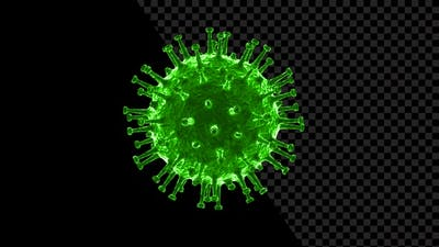 Coronavirus Visualization Covid 19