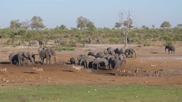 Thumbnail for Herd of African Bush elephants and roan antelope standing at a dry waterhole