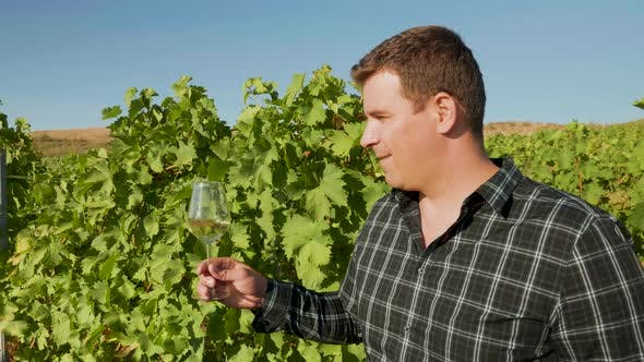 Thumbnail for Man Looking at a Glass of Wine in Beautiful Vineyard