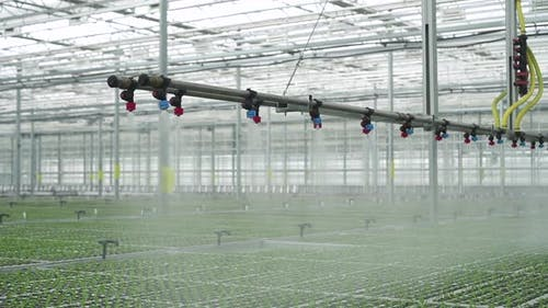 Hydroponic Greenhouse View of Watering Plants with Using Modern Technology on Farm Spbd