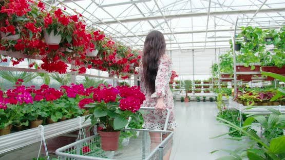 Woman with Shopping Cart Buying Flowers at Greenhouse