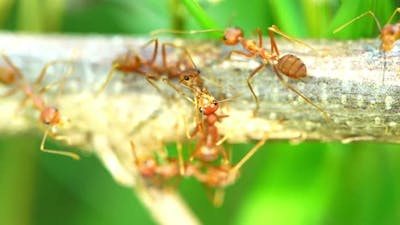 Ants were kissing on the branch