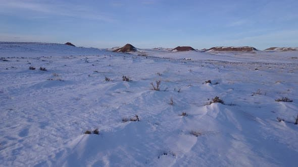Thumbnail for Prairie Buffalo in Winter Windswept Drifts in Wyoming United States