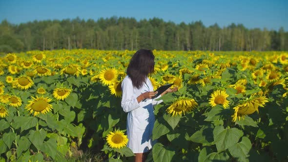 Thumbnail for Agronomist Making Quality Control in Cultivated Field