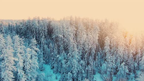 Wonderful Winter Forest with and Icy River at Sunset Light